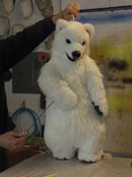 trained polar bear cub
